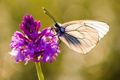 Mariposa con la flor imagen de archivo