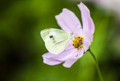 Mariposa con la flor en la universidad de Shenzhen de China Imagen de archivo