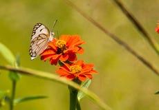 Mariposa con la flor imagen de archivo libre de regalías