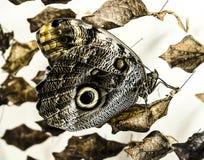 Mariposa con las hojas Foto de archivo libre de regalías