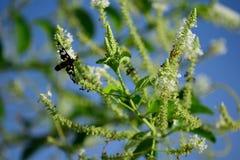 Mariposa con olor de la flor Foto de archivo libre de regalías