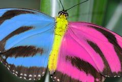 Mariposa creativa. Fotografía de archivo libre de regalías