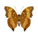 Mariposa de Brown Fotos de archivo libres de regalías