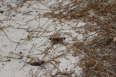Mariposa de Brown en la arena Imagen de archivo libre de regalías