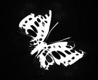 Mariposa de col Imagen de archivo
