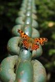 Mariposa de emperador Fotos de archivo