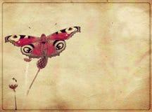 Mariposa de Grunge Foto de archivo libre de regalías