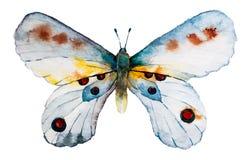 Mariposa de la acuarela stock de ilustración
