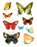 Mariposa de la acuarela Fotos de archivo
