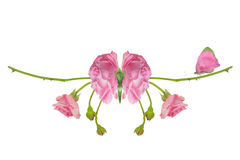 Mariposa de la fantasía con Rose Wings Foto de archivo