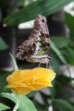 Mariposa de la flor Imagen de archivo libre de regalías