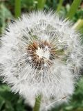Mariposa de la flor de la floración imagenes de archivo