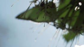 Mariposa de la gaviota en la planta metrajes