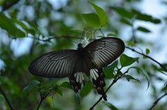 Mariposa de la naturaleza Fotografía de archivo