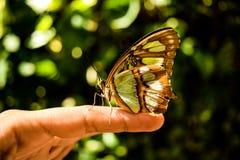Mariposa de la naturaleza Fotografía de archivo libre de regalías