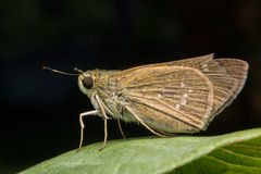 Mariposa de la noche Imágenes de archivo libres de regalías