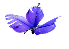 Mariposa de la pluma imagen de archivo libre de regalías