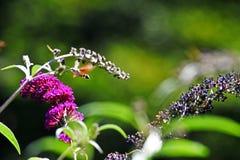 Mariposa de la polilla Foto de archivo libre de regalías