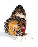 Mariposa de Lacewing Imágenes de archivo libres de regalías