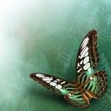 Mariposa de las podadoras (Parthenos Sylvia) el verde hermoso del vuelo Imagenes de archivo