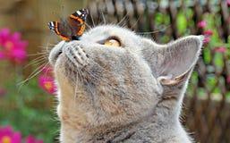 Mariposa de los amigos del jardín en la nariz del gato imagen de archivo