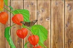 Mariposa de madera manchada Fotografía de archivo libre de regalías
