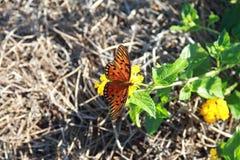 Mariposa de monarca Imagenes de archivo