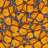 Mariposa de monarca anaranjada Foto de archivo libre de regalías