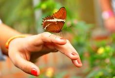 Mariposa de monarca en la mano Fotos de archivo