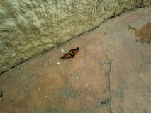 Mariposa de monarca en la tierra imagen de archivo