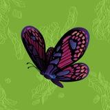 Mariposa de monarca en modelo inconsútil verde Fotografía de archivo libre de regalías