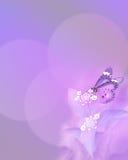 Mariposa de monarca púrpura en fondo de la tarjeta Imagen de archivo