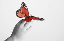 Mariposa de monarca roja Foto de archivo libre de regalías