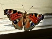 Mariposa de pavo real europea que se sienta en una ventana fotos de archivo