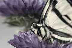 Mariposa de reclinación Imagen de archivo libre de regalías