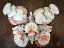 Mariposa de Shell Fotografía de archivo