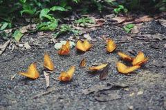 Mariposa de Yeallow en el bosque de Cuc Phuong imagen de archivo
