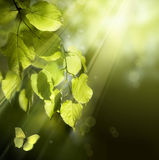 Mariposa del arte en las hojas del resorte imagen de archivo libre de regalías