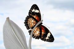 Mariposa del color en lirio Imágenes de archivo libres de regalías