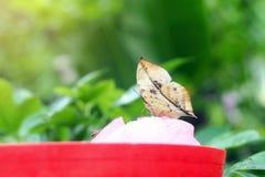 Mariposa del corazón Fotografía de archivo