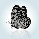 Mariposa del dibujo de la mano del vector Imágenes de archivo libres de regalías