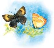 Mariposa del ejemplo de la acuarela Imagen de archivo