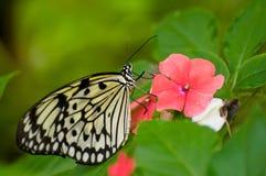 Mariposa del papel de arroz en la flor roja foto de archivo