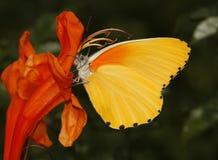 Mariposa del special del otoño Imagen de archivo