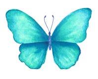 Mariposa del verano Ilustración de la acuarela libre illustration