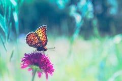 Mariposa del verano y la flor Fotografía de archivo