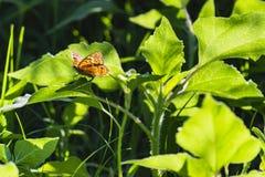 Mariposa dentro del verde fotografía de archivo libre de regalías