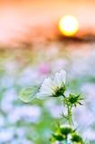 Mariposa descansada sobre una flor imagenes de archivo