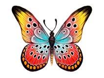 Mariposa dibujada mano en el fondo blanco Fotografía de archivo libre de regalías