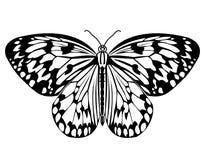 Mariposa, dibujo monocromático en mariposa tropical blanco y negro, aislada en el fondo blanco libre illustration